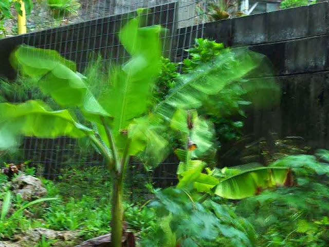 banana leaves with severe motion blur