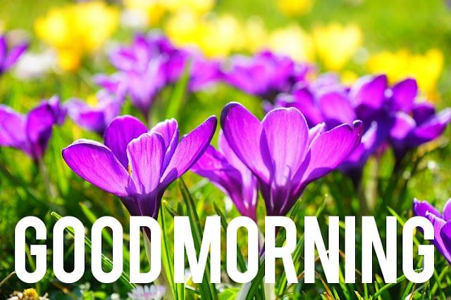 Good Morning.
