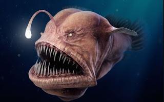 Lopiiformes atau Anglerfish