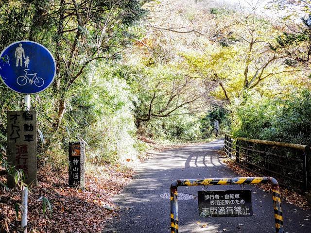 箱根九頭竜の森セラピーロード