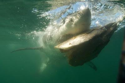 """Cena de """"Rumo ao Desconhecido: Em Busca do Tubarão Gigante"""" - Divulgação"""