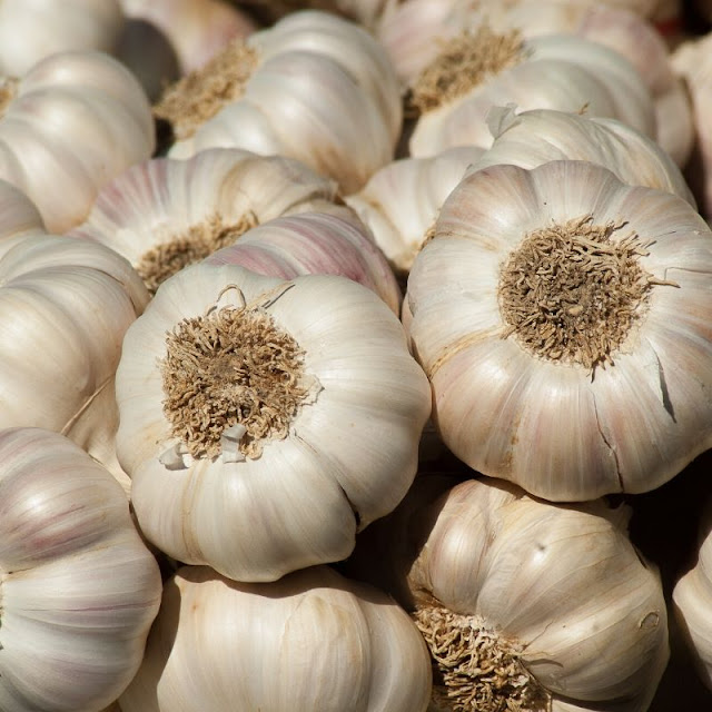 Bawang Putih dan Kegunaanya Sebagai Obat