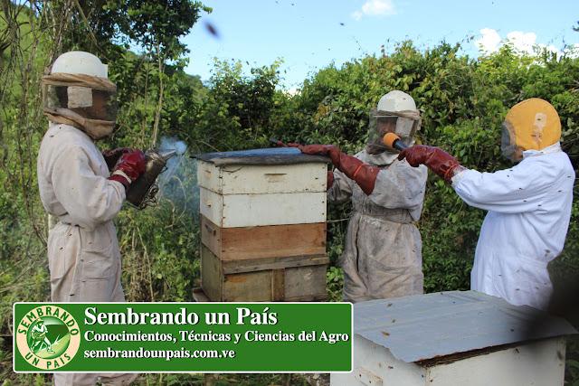 apicultores trabajando