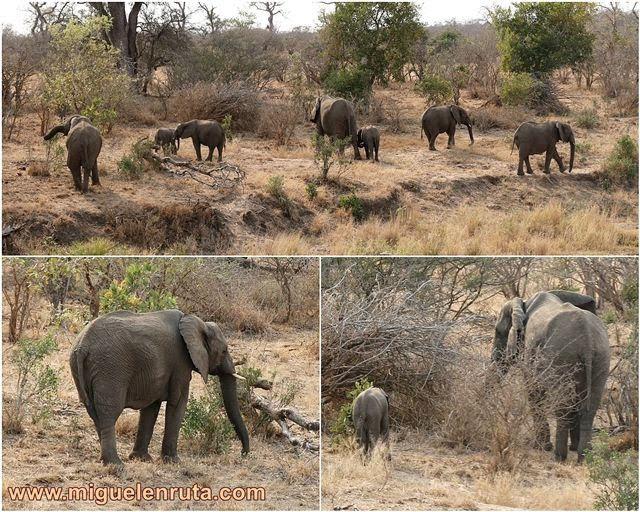 Elefantes-Kruger-Sudáfrica