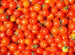 Spesifikasi Tanaman  TOMAT (Solanum lycopersicum)