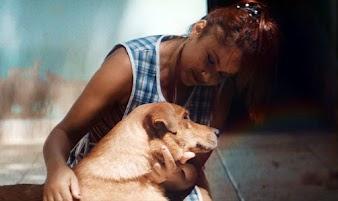 PEDIGREE ensina pessoas a cuidarem de cães que ficaram cegos