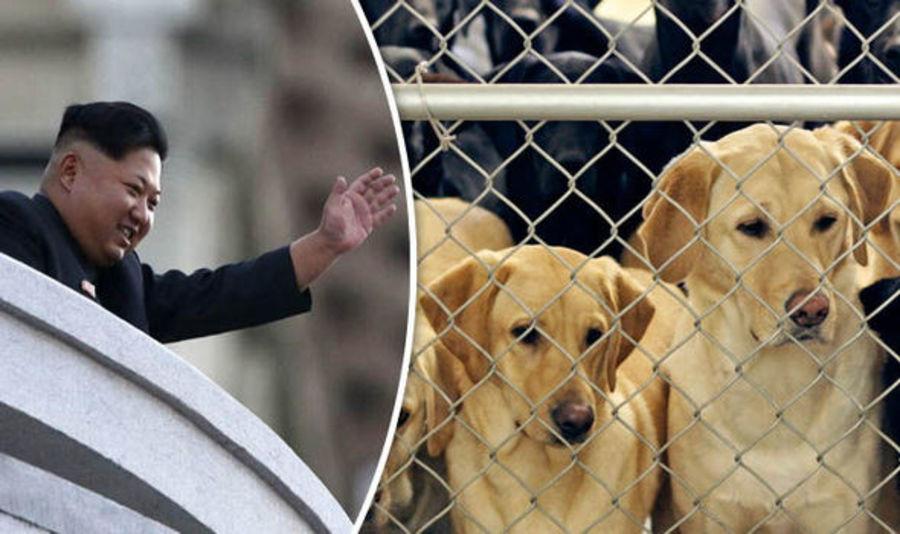 Comunismo: Coreia do Norte ordena que cachorros sejam entregues a restaurantes