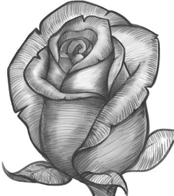 صور رسم وردة جميلة