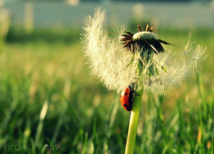 ladybug photography