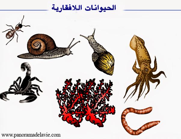 الحيوانات اللافقارية