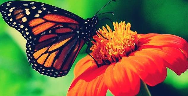 Gambar  . Bunga dengan kupu-kupu