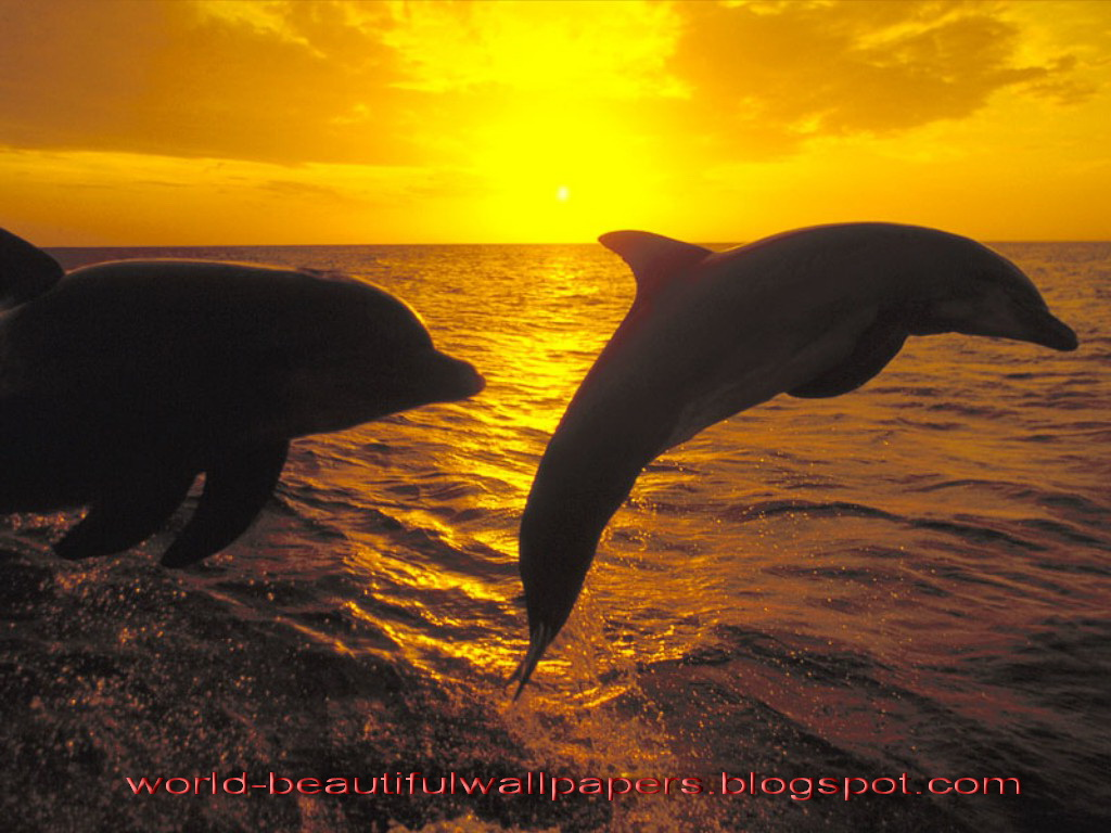 Beautiful Wallpapers Beautiful Dolphins-9593