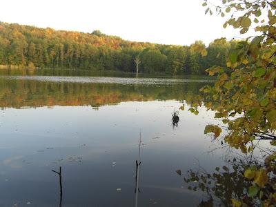 Лесной пруд Вязовка