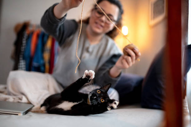 Playing With Your Cat – The Benefits