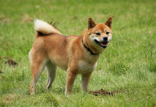 What S The Oldest Dog Breed