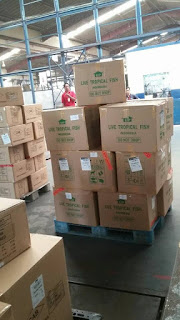 Jual export  ikan hias,  Harga export  ikan hias,  Toko export  ikan hias,  Diskon export  ikan hias,  Beli export  ikan hias,  Review export  ikan hias,  Promo export  ikan hias,  Spesifikasi export  ikan hias,  export  ikan hias Murah,  export  ikan hias Asli,  export  ikan hias Original,  export  ikan hias Jakarta,  Jenis export  ikan hias,  Budidaya export  ikan hias,  Peternak export  ikan hias,  Cara Merawat export  ikan hias,  Tips Merawat export  ikan hias,  Bagaimana cara merawat export  ikan hias,  Bagaimana mengobati export  ikan hias,  Ciri-Ciri Hamil export  ikan hias,  Kandang export  ikan hias,  Ternak export  ikan hias,  Makanan export  ikan hias,  guppy breeding export  ikan hias,  guppies for sale export  ikan hias,  guppy care export  ikan hias,  breeding guppies export  ikan hias,  male guppies export  ikan hias,  female guppies export  ikan hias,  guppy aquarium export  ikan hias,  baby guppies export  ikan hias,  poecilia reticulata export  ikan hias,  guppy tank export  ikan hias,  guppy fry export  ikan hias,  guppy giving birth export  ikan hias,  how long do guppies live export  ikan hias,  guppys export  ikan hias,  guppy guppy export  ikan hias,  guppy food export  ikan hias,  guppy breeding tank export  ikan hias,  fantail guppy export  ikan hias,  guppy breeds export  ikan hias,  guppy s export  ikan hias,  wild guppies export  ikan hias,  guppy babies export  ikan hias,  guppy varieties export  ikan hias,  freshwater guppies export  ikan hias,  guppy female export  ikan hias,  tropical guppies export  ikan hias,  female guppies for sale export  ikan hias,  guppy price export  ikan hias,  raising guppies export  ikan hias,  guppies for sale online export  ikan hias,  guppy info export  ikan hias,  buy guppies online export  ikan hias,  guppy sale export  ikan hias,  buy guppies export  ikan hias,  guppy diseases export  ikan hias,  guppies online export  ikan hias,  caring for guppies export  ikan hias,  best food for guppies export  ikan hias,  food for guppies export  ikan hias,  blue guppy export  ikan hias,  guppy breeding setup export  ikan hias,  guppy birth export  ikan hias,  guppy species export  ikan hias,  gestation period for guppies export  ikan hias,  guppys online export  ikan hias,  guppy care sheet export  ikan hias,  guppy blue export  ikan hias,  keeping guppies export  ikan hias,  guppies for sale cheap export  ikan hias,  the guppy export  ikan hias,  guppy breeding cycle export  ikan hias,  show guppies export  ikan hias,  thai guppy export  ikan hias,  male and female guppies export  ikan hias,  what to feed baby guppies export  ikan hias,  yellow guppy export  ikan hias,  guppy names export  ikan hias,  guppy gestation period export  ikan hias,  feeding guppies export  ikan hias,  guppy genetics export  ikan hias,  guppy show export  ikan hias,  turquoise guppy export  ikan hias,  guppy fry care export  ikan hias,  guppy games export  ikan hias,  guppy gestation export  ikan hias,  guppy colors export  ikan hias,  guppy tank setup export  ikan hias,  trinidadian guppies export  ikan hias,  guppies having babies export  ikan hias,  guppy strains export  ikan hias,  what do guppies eat export  ikan hias,  what to feed guppies export  ikan hias,  guppy life span export  ikan hias,  how to care for guppies export  ikan hias,  guppy male and female export  ikan hias,  what is a guppy export  ikan hias,  guppy natural habitat export  ikan hias,  german guppy export  ikan hias,  guppy poecilia reticulata export  ikan hias,  guppy images export  ikan hias,  images of guppies export  ikan hias,  fishguppy export  ikan hias,  guppy facts export  ikan hias,  how many babies do guppies have export  ikan hias,  how big do guppies get export  ikan hias,  how to take care of guppies export  ikan hias,  fan tailed guppies export  ikan hias,  guppy pregnant export  ikan hias,  guppy life cycle export  ikan hias,  temperature for guppies export  ikan hias,  what are guppies export  ikan hias,  guppies restaurant export  ikan hias,  guppy definition export  ikan hias,  guppy meaning export  ikan hias,  guppy size export  ikan hias,  define guppy export  ikan hias,  guppy wiki export  ikan hias,  how do guppies give birth export  ikan hias,  baby guppys export  ikan hias,  guppies bar export  ikan hias,  how many fry do guppies have export  ikan hias,  guppy behavior export  ikan hias,  how many babies does a guppy have export  ikan hias,  where do guppies come from export  ikan hias,  how do guppies reproduce export  ikan hias,  what does guppy mean export  ikan hias,  what is guppy export  ikan hias,  types of guppy export  ikan hias,  guppy guppies export  ikan hias,  guppy house hours export  ikan hias,  guppys on the go export  ikan hias,  guppys restaurant export  ikan hias,  guppies definition export  ikan hias,  do guppies eat their babies export  ikan hias,  gestation guppy export  ikan hias,  bubble guppies export  ikan hias,  guppy export  ikan hias,  export  ikan hias Jakarta,  export  ikan hias Bandung,  export  ikan hias Medan,  export  ikan hias Bali,  export  ikan hias Makassar,  export  ikan hias Jambi,  export  ikan hias Pekanbaru,  export  ikan hias Palembang,  export  ikan hias Sumatera,  export  ikan hias Langsa,  export  ikan hias Lhokseumawe,  export  ikan hias Meulaboh,  export  ikan hias Sabang,  export  ikan hias Subulussalam,  export  ikan hias Denpasar,  export  ikan hias Pangkalpinang,  export  ikan hias Cilegon,  export  ikan hias Serang,  export  ikan hias Tangerang Selatan,  export  ikan hias Tangerang,  export  ikan hias Bengkulu,  export  ikan hias Gorontalo,  export  ikan hias Kota Administrasi Jakarta Barat,  export  ikan hias Kota Administrasi Jakarta Pusat,  export  ikan hias Kota Administrasi Jakarta Selatan,  export  ikan hias Kota Administrasi Jakarta Timur,  export  ikan hias Kota Administrasi Jakarta Utara,  export  ikan hias Sungai Penuh,  export  ikan hias Jambi,  export  ikan hias Bandung,  export  ikan hias Bekasi,  export  ikan hias Bogor,  export  ikan hias Cimahi,  export  ikan hias Cirebon,  export  ikan hias Depok,  export  ikan hias Sukabumi,  export  ikan hias Tasikmalaya,  export  ikan hias Banjar,  export  ikan hias Magelang,  export  ikan hias Pekalongan,  export  ikan hias Purwokerto,  export  ikan hias Salatiga,  export  ikan hias Semarang,  export  ikan hias Surakarta,  export  ikan hias Tegal,  export  ikan hias Batu,  export  ikan hias Blitar,  export  ikan hias Kediri,  export  ikan hias Madiun,  export  ikan hias Malang,  export  ikan hias Mojokerto,  export  ikan hias Pasuruan,  export  ikan hias Probolinggo,  export  ikan hias Surabaya,  export  ikan hias Pontianak,  export  ikan hias Singkawang,  export  ikan hias Banjarbaru,  export  ikan hias Banjarmasin,  export  ikan hias Palangkaraya,  export  ikan hias Balikpapan,  export  ikan hias Bontang,  export  ikan hias Samarinda,  export  ikan hias Tarakan,  export  ikan hias Batam,  export  ikan hias Tanjungpinang,  export  ikan hias Bandar Lampung,  export  ikan hias Kotabumi,  export  ikan hias Liwa,  export  ikan hias Metro,  export  ikan hias Ternate,  export  ikan hias Tidore Kepulauan,  export  ikan hias Ambon,  export  ikan hias Tual,  export  ikan hias Bima,  export  ikan hias Mataram,  export  ikan hias Kupang,  export  ikan hias Sorong,  export  ikan hias Jayapura,  export  ikan hias Dumai,  export  ikan hias Pekanbaru,  export  ikan hias Makassar,  export  ikan hias Palopo,  export  ikan hias Parepare,  export  ikan hias Palu,  export  ikan hias Bau-Bau,  export  ikan hias Kendari,  export  ikan hias Bitung,  export  ikan hias Kotamobagu,  export  ikan hias Manado,  export  ikan hias Tomohon,  export  ikan hias Bukittinggi,  export  ikan hias Padang,  export  ikan hias Padangpanjang,  export  ikan hias Pariaman,  export  ikan hias Payakumbuh,  export  ikan hias Sawahlunto,  export  ikan hias Solok,  export  ikan hias Lubuklinggau,  export  ikan hias Pagaralam,  export  ikan hias Palembang,  export  ikan hias Prabumulih,  export  ikan hias Binjai,  export  ikan hias Medan,  export  ikan hias Padang Sidempuan,  export  ikan hias Pematangsiantar,  export  ikan hias Sibolga,  export  ikan hias Tanjungbalai,  export  ikan hias Tebingtinggi,  export  ikan hias Yogyakarta,