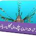 Wo Machli Jo Pehlay Ap Nay Kabhi Nahi Dekhi Ho Gi.Schaefer's Anglerfish