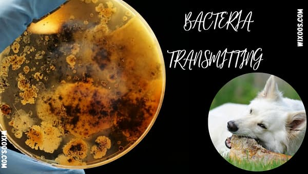 Bacteria transmitting between dogs and owners