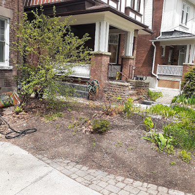 High Park North New Front Yard Makeover Before by Paul Jung Gardening Services--a Toronto Organic Gardener