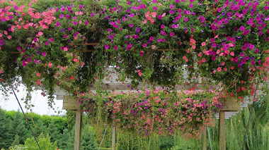 Plantas con floración estival en el Jardín Botánico de Chicago