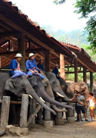 Elephant Work Camp, Chiang Mai, Thailand
