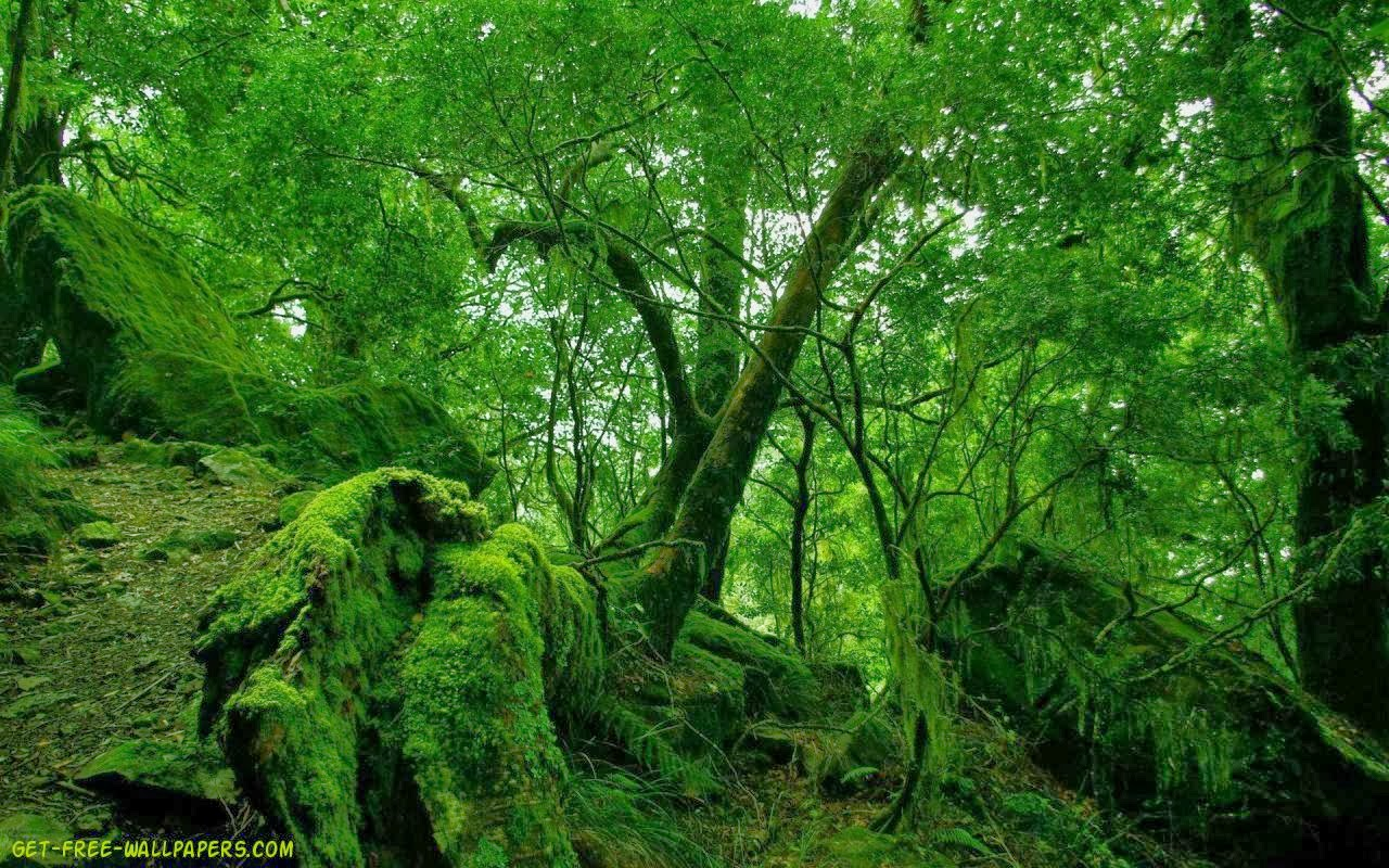 HIGH QUALITY HD WALLPAPERS GREENERY