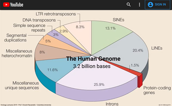 A big part of the human genome comes from viruses (Source: Vincent Racaniello, Columbia, U.)
