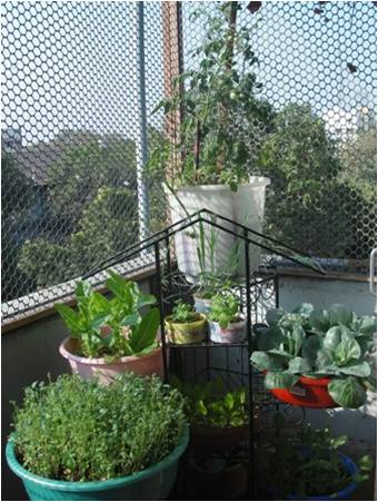 Urban Leaves India 5 Baby Steps To Start Off Your Kitchen Garden