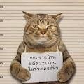 Langgar Jam Malam Saat Lockdown, Seekor Kucing Ditangkap Polisi