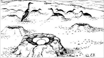 Cormorán imperial Phalacrocorax atriceps