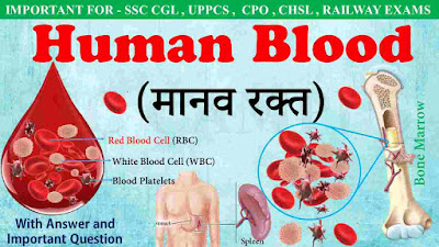 Human-blood-function-of-blood-RBc-WBC-Plasma