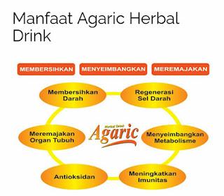 Manfaat Agaric Herbal Drink