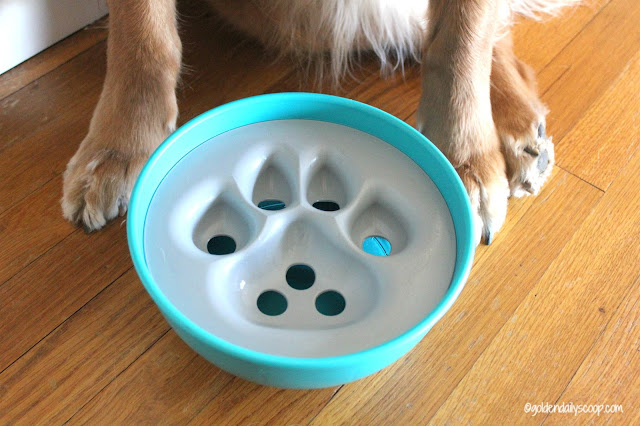 dog product reviews and giveaway, dog bowl, dog puzzle