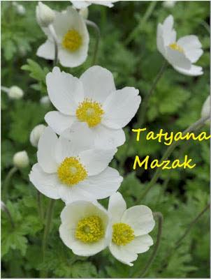 Foto cedida por Таtyana Мazak. Ucrania
