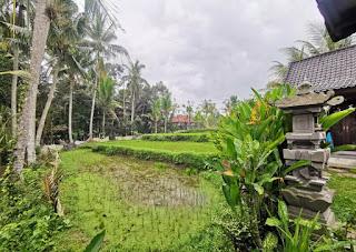 Nuestro hotel, el Buda Cottage Ubud.