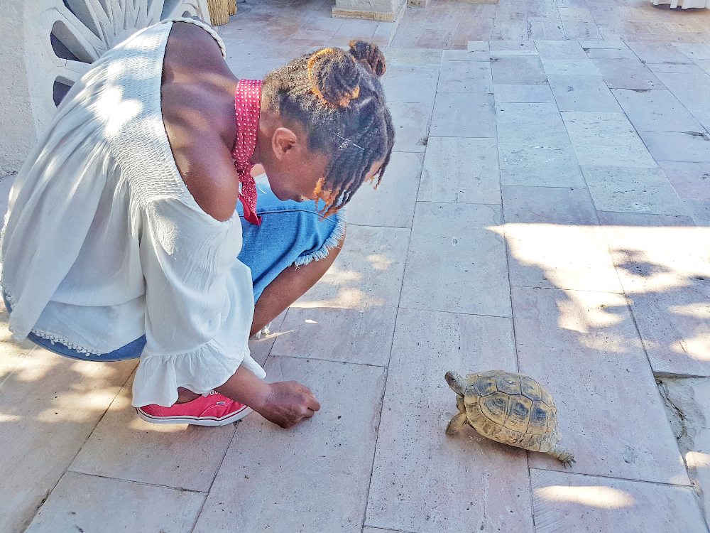 museum hotel turtle garden