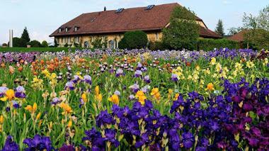 Jardin des Iris en Château de Vullierens, Suiza