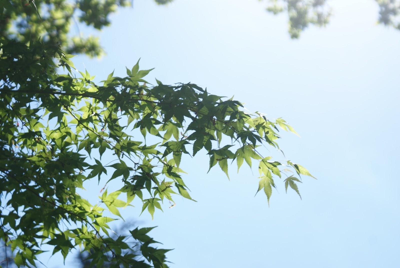 jardin zen erik borja érable maple spring