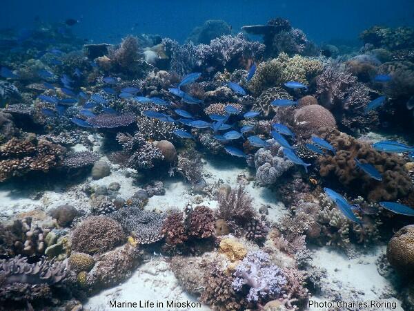 Marine Life in Raja Ampat's Mioskon