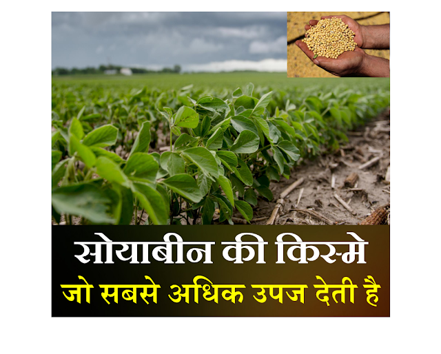 soyabean ki kheti,SmartBusinessPlus,sbp,soyabean ki kheti in hindi,soyabean,soyabean farming,soybean,soybean ki kheti,soyabean ki uttam kheti,soyabean ki unnat kheti,soyabean seeds,soyabean ki jaivik kheti,soyabean ki kheti ka tarika,soyabean ki kheti ke tarike,soyabean ki kheti ki jankari,soyabean ki kheti kese krein,soyabean ki kheti kha hoti hai,soyabean ki kheti kaise ki jati,soyabean ki kheti kaha hoti hai