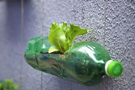 Detalle de un jardín vertical casero hecho con botellas recicladas