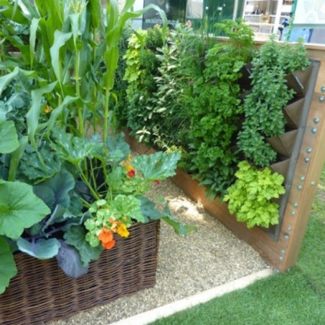 Grow good vegetables in small garden