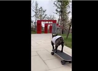 thú cưng trượt ván