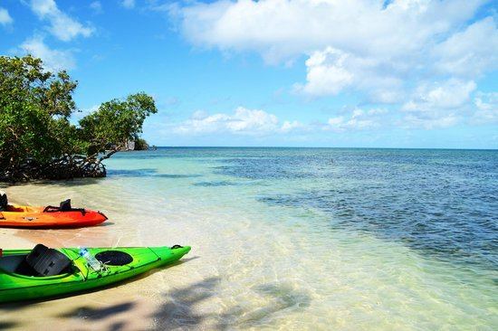 Kayak qui accoste au rivage d'une mangrove