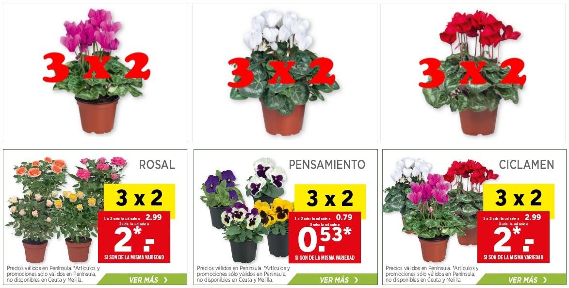 Lidl catalogo lidl plantas for Plantas de interior lidl