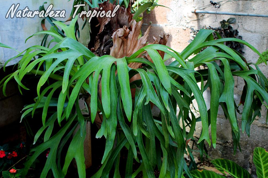 Naturaleza tropical 6 helechos que no pueden faltar en tu - Tipos de jardines ...