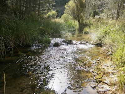 Las aguas cristalinas del río Tejadillos (Cuenca)