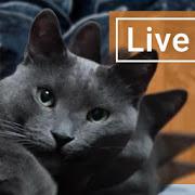 cute-lazy-cat-live-wallpaper-apk