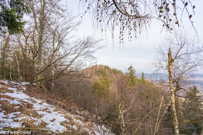Wierzchołek Wołowca (776 m n.p.m.) widziany ze szczytu Kozła (774 m n.p.m.)