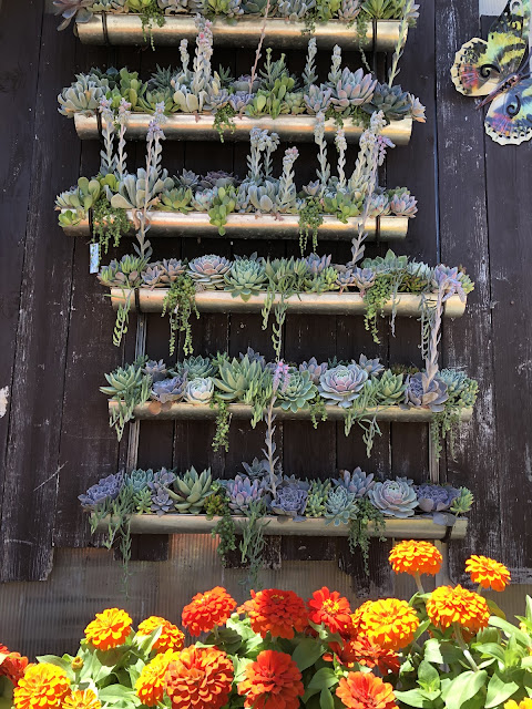 suuculents and zinnias